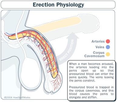 Erectile Dys